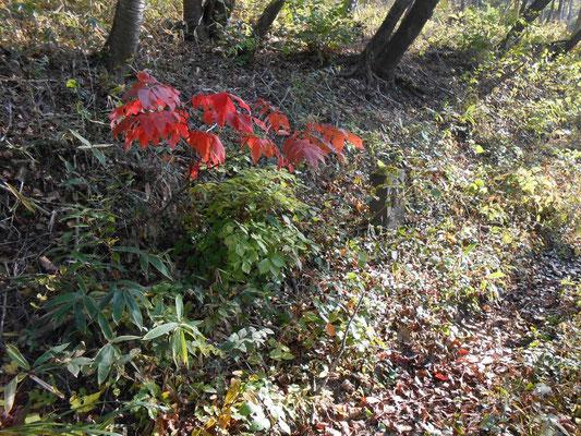 古い石碑と紅葉