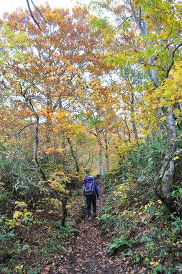 白神岳の秋4