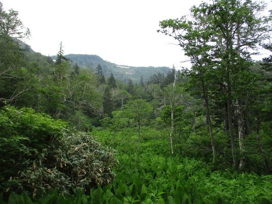 道は樹林のなかや、こんなうっそうとミズバショウなどが生い茂った中を進んでいきます