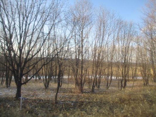 横一線に広がる構図のなかに、こうした樹木の様が存在感を与えこの上なく美しい絵画にしていく