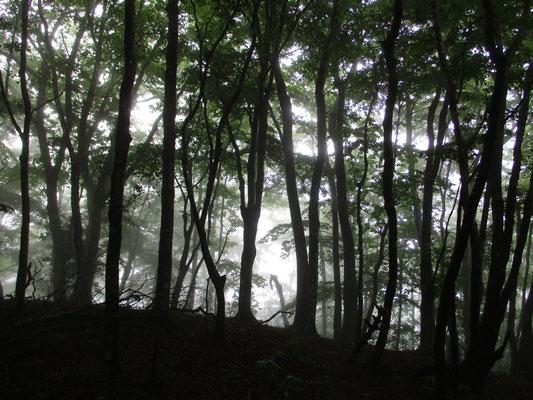 霧のなかのシルエット