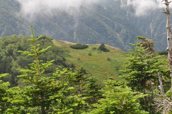 峠から少し登ると向こうの小河内岳に続く登山道沿いに花畑の草地が見えます 面白い景色ですが、その草地の向こう側は断崖絶壁