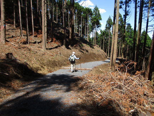 真新しい林道を辿って行きます
