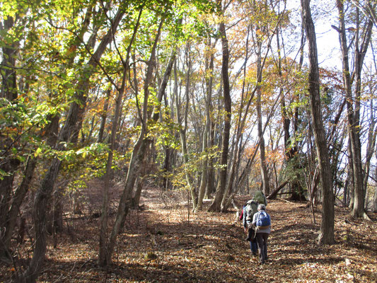 笹尾根の秋10 こうしてゆっくりと笹尾根を進んでいく