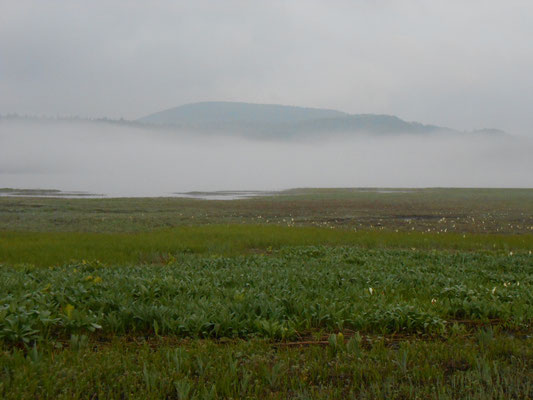 大江湿原と尾瀬沼