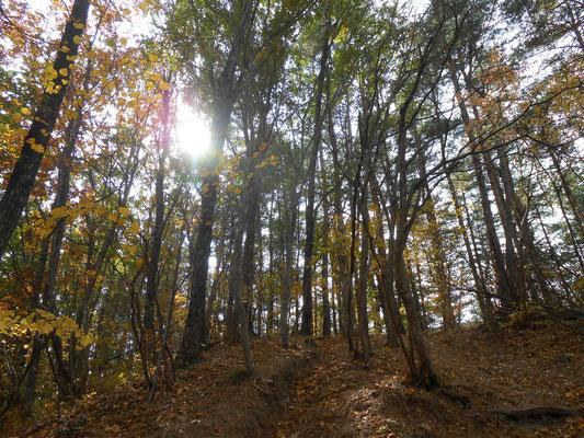 逆光の落葉樹