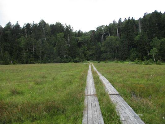 木道が消えている森の中の向こうが白砂峠、尾瀬ヶ原から200m以上を登って着いたところが白砂田代です