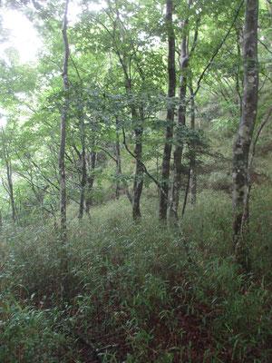 最近はシカの食圧で林床が丸裸の所ばかりを見ているので、この藪にはちょっと感動