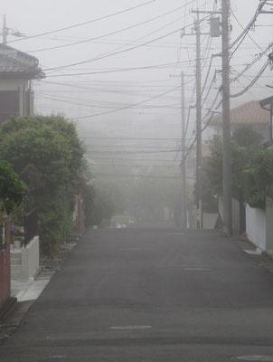 霧の朝 いつもならずっと向こうまでクリアーに見通せる
