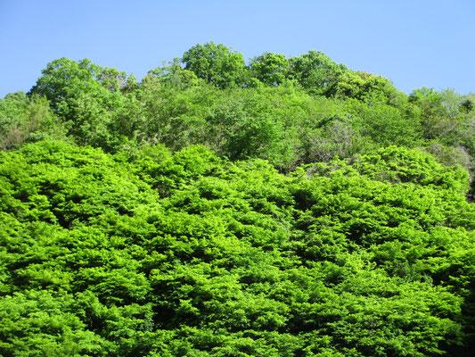 あふれる新緑