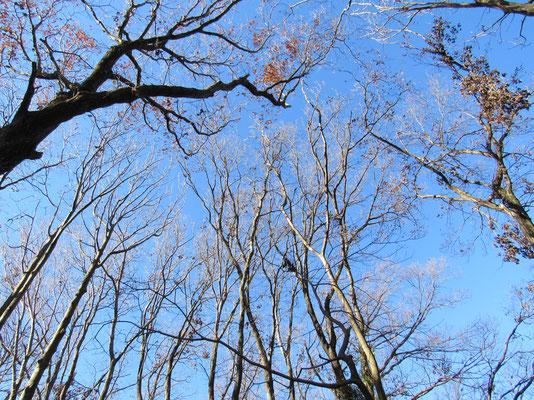 見上げると冬空が青く美しい