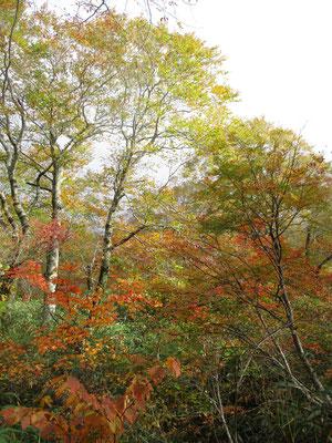 色づいた森が美しい
