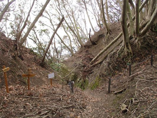 「狢(むじな)」という分岐地点 こうしたタワミになった場所は風の通り道になるので、大きな倒木も多い