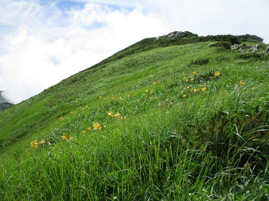 飯豊本山を越えると見事なお花畑へ