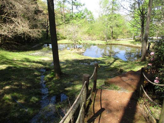 神ノ池園地と呼ばれているところの池=多分これが「神ノ池」なんでしょうが、のぞいてみると気持ち悪いほどの大量のカエルの卵が(ブツブツ卵が充填されたホース状がそれこそ何十メートルも!ウネウネ・グルグルと)池の淵の底を取り巻いていた!