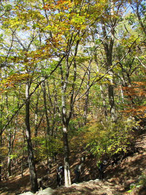 山も秋色になってきていました