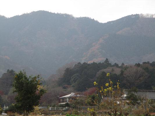 中央の右にカーブしている自然林の茶色い紅葉の尾根が今日辿った所 遠目からは大した斜度ではないが、実際はひどい急登だった