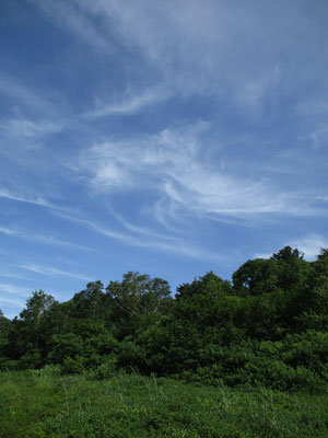 暑さのなか、ちょっぴり秋を感じさせるような雲が青空に…