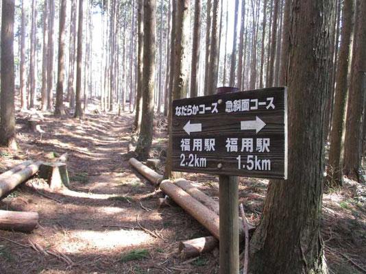 自然林の照葉樹林帯とこうした植林帯がまだらになった山です