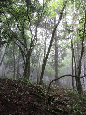 自然林で雰囲気がよくなってくる