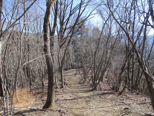 その後のコースは気持ちのいい木立の山道あり