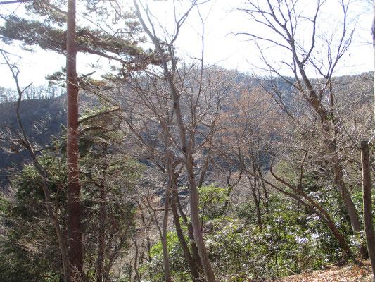 冬の斜めからの光線を受け輝く木立 その向こうの稜線が近づくほどの高さまで登ってきました