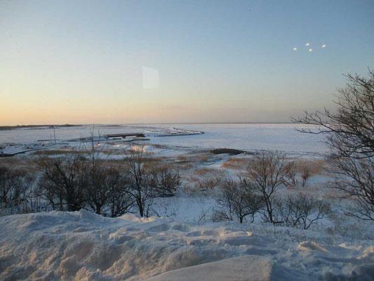 夕方の斜光の春国岱