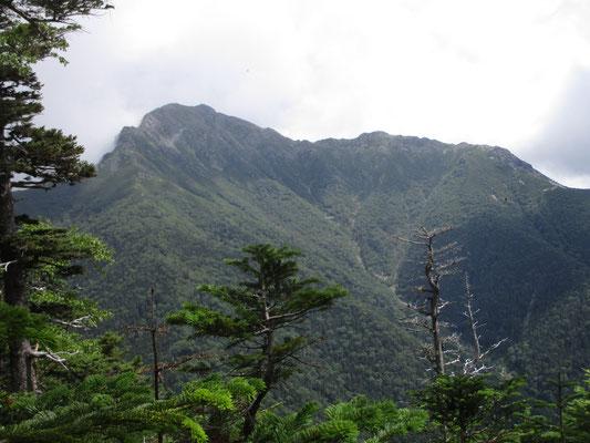 本谷山山頂付近 立ち枯れの箇所からはグッと近くなった塩見岳が見通せます