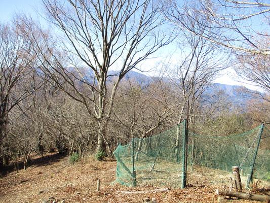 ヒオウギ広場から丹沢の主稜方面 丹沢山から蛭ヶ岳まで主だった山が見えます 囲いは試験的に会で作った鹿よけのもので、この中でヒオウギの苗が育ち花を咲かせるのを楽しみにしています