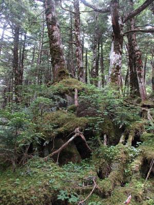 苔の深い森