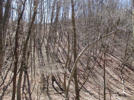 沢沿いの雑木林 キラキラと梢が輝く