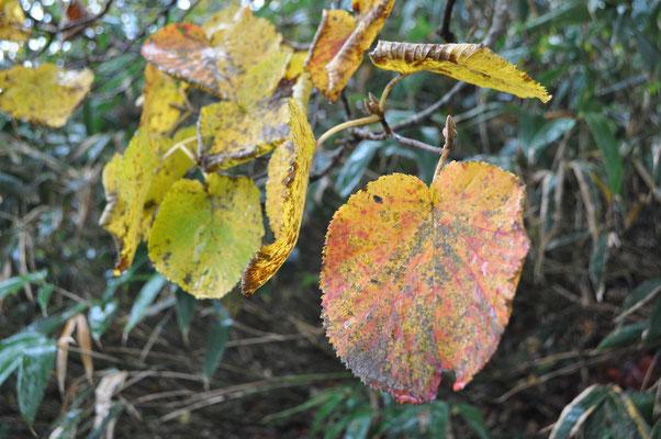 秋色の下山4