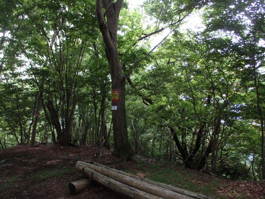 木陰で薄暗いほどの華厳山山頂ベンチ