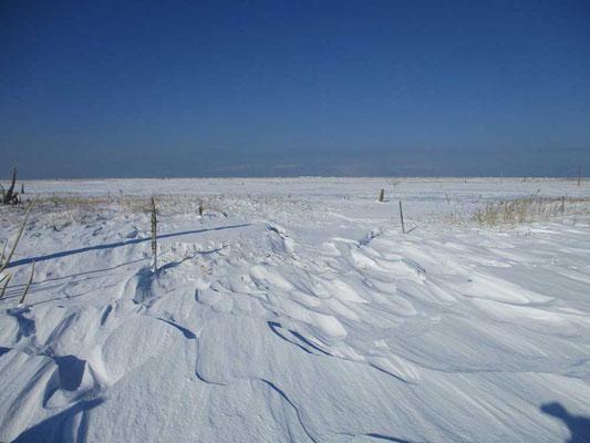何もない雪原に一人佇む広大さは、写真ではとらえきれません