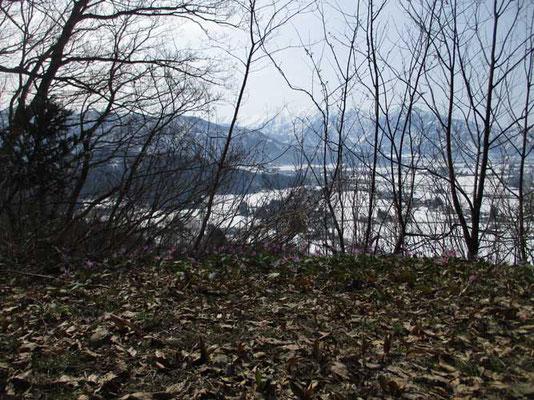 芽吹き前の雑木の向こうには巻機山が真っ白に見ていました