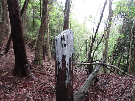 下山途中のたわみにあった白くなった折れた立木 同行の仲間の推測:ここは猛禽類かフクロウか何かわからないが、止まり木なのだ 「きっとお気に入りの場所なんだよ」…なるほど!
