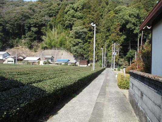 お茶畑の脇を通って登山口の神社へ