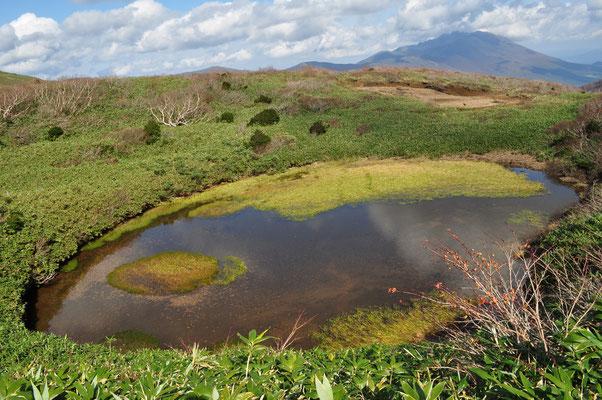 笹森山との鞍部にある池塘の一つ この池に辿り着く少し前、遠くからですが水を飲みに来たクマを見ました