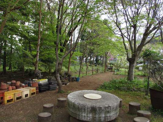 沓掛館山の春の情景 ここが夏には緑深くなり、涼しい緑風のなか「ヒオウギ花見会」が開催されます