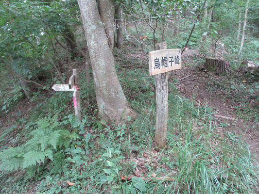 オケラを見つけながら登って行くと「烏帽子峰」への看板が出てきたのでそちらへ登ることに