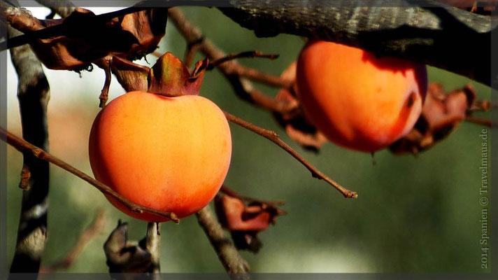 Kakifrucht