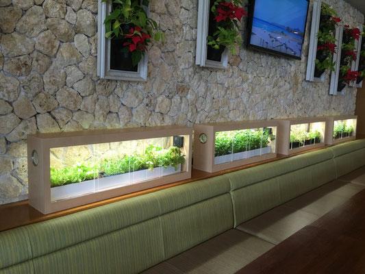 美ら海水族館 レストラン「イノー」