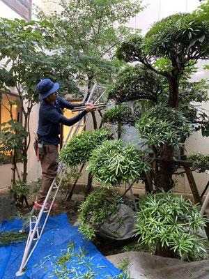 老人ホーム緑化管理