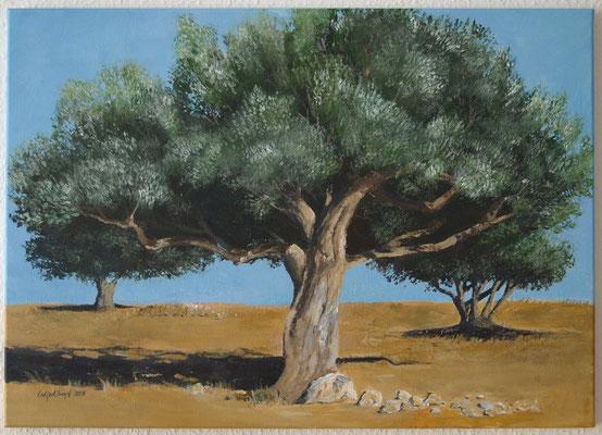 """Olivenbaum"" Acryl auf Leinwand (Keilrahmen) 50x70 cm"