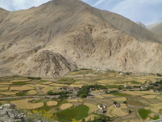 Vallée au Ladakh