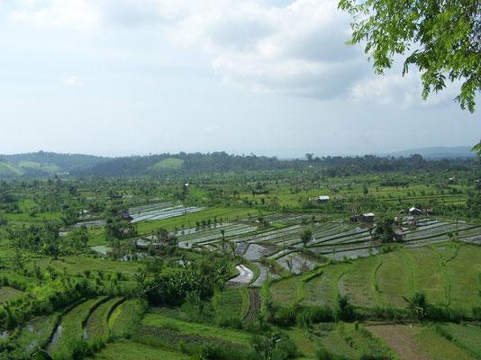 Les magnifiques rizières de Java et Bali