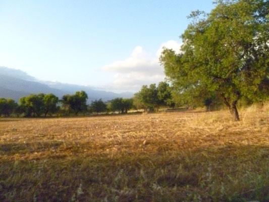 Paysage de l'Arrière Pays de  Kelokedara