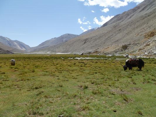 Sur la route du lac Pangong à 4220m d'altitude