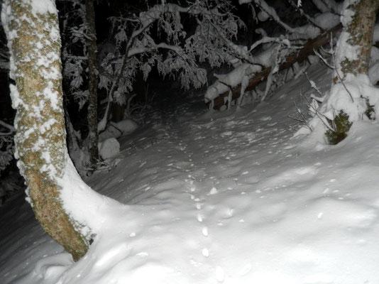 ... im dunklen Wald