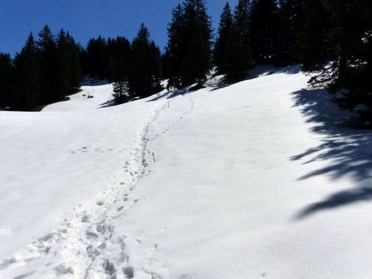 Anstieg südlich des Ibergereggs